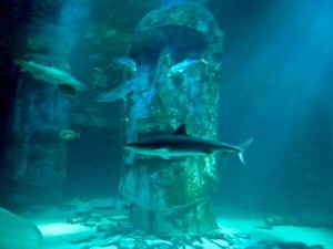 sea-life-aquarium-londres-requin-statue-paques