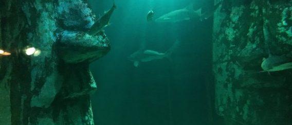 Visiter le Sea Life Aquarium de Londres