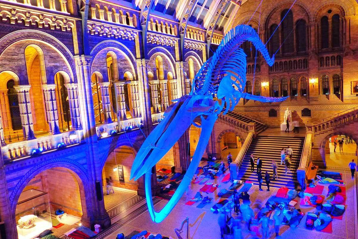 Une nuit au musée d'histoire naturelle de Londres