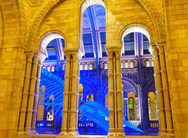 musee-histoire-naturelle-baleine